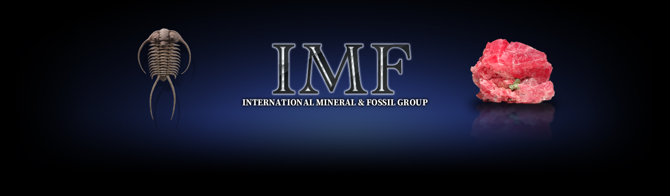 INTERNATIONAL MINERAL & FOSSIL GROUP